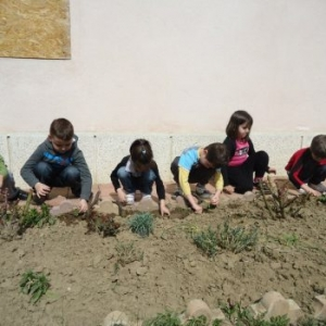 Plantăm flori de primăvară