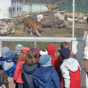 Prietenii mei de la Zoo